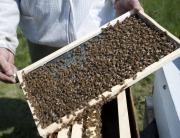 beekeeper-stephen-repasky-29556