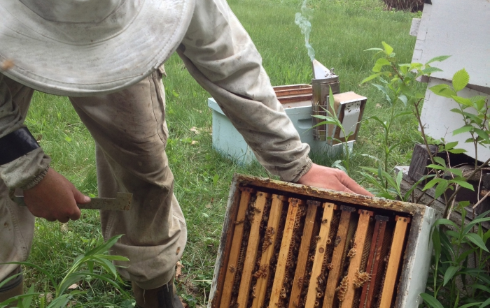 Bee Keeping 101 – Starts Saturday, October 26