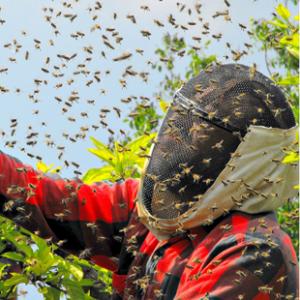 swarm_management