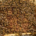 healthy hive1